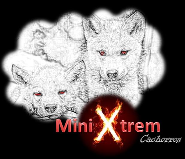 Nace el Proyecto MiniXtrem Cachorros
